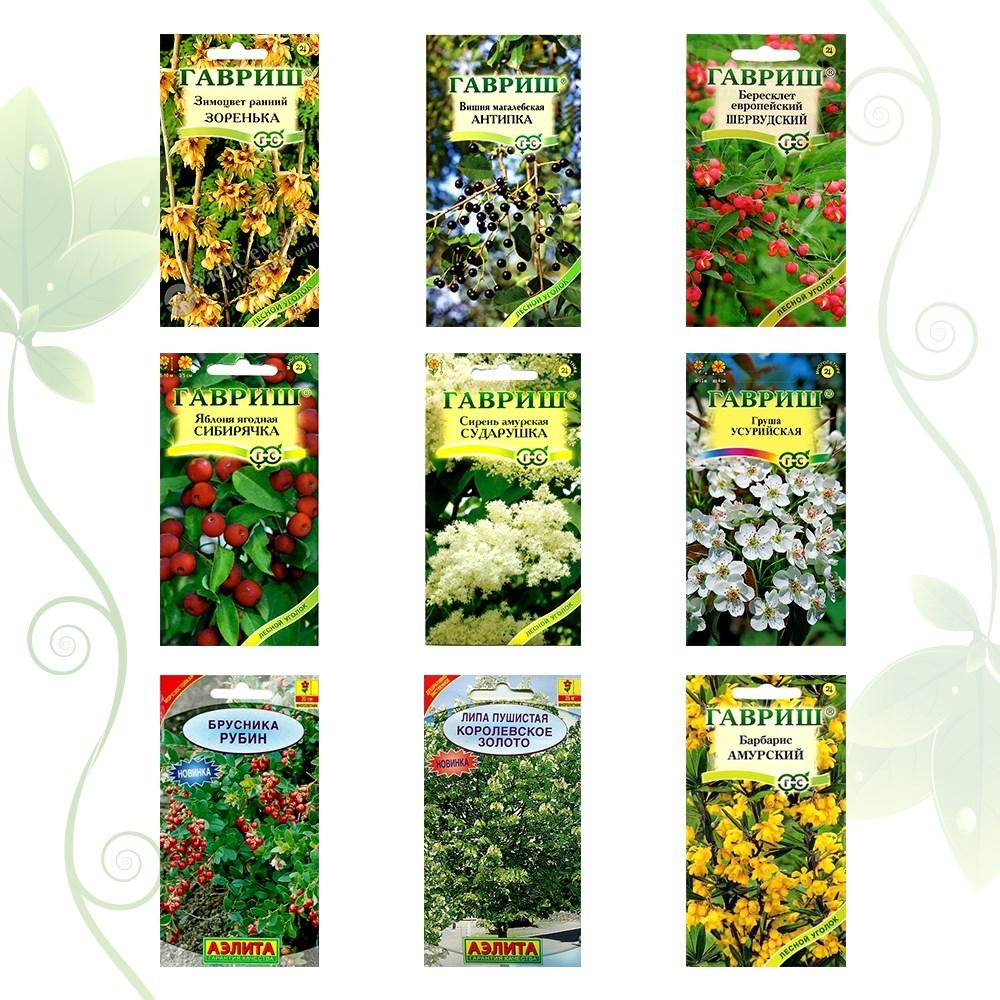 Коллекция семян Лесной уголок