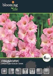 Гладиолус Крупноцветковый Дана (7шт)