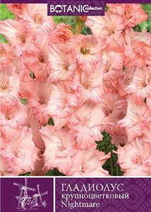 Гладиолус Крупноцветковый Кошмар (10шт)