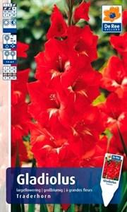 Гладиолус Крупноцветковый Традехорн (7шт)